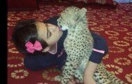 بالصور... طفلة لا تنام الا بجانب الفهد