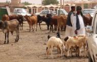 السودان تعاني غلاء الاضاحي رغم امتلاكها 100 مليون رأس ماشية