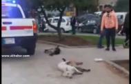 موجة غضب من بلدية الغبيري بعد تسميم الكلاب وقتلها