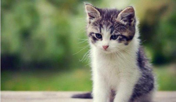 قطة تعلق يومين فوق ناطحة سحاب ثم تنجو.. فيديو